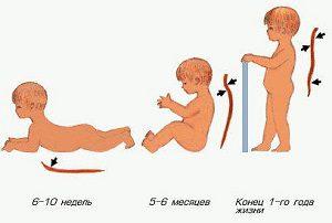 Комплекс упражнений для профилактики нарушений осанки у детей
