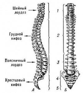 Как связаны шейный остеохондроз и артериальное давление