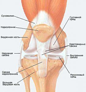Изображение - Артроз коленного сустава тазобедренного %D0%A3%D0%97%D0%98-%D1%81%D1%83%D1%81%D1%82%D0%B0%D0%B2%D0%BE%D0%B2-281x300