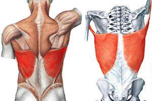 Как развивать широчайшие мышцы спины