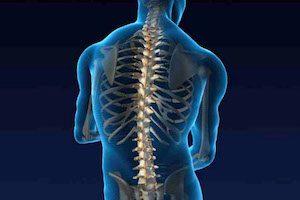 Строение костей спины человека